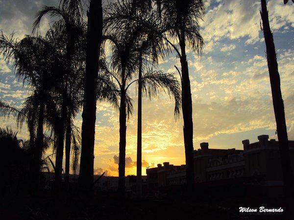 palmeiras do crato - Por: Wilson Bernardo