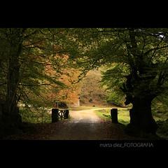 _caminando hacia la luz_ ([marta díez . fotografía]) Tags: backlight canon contraluz arbol arboles bosque otoño cantabria ucieda 400d minerva77