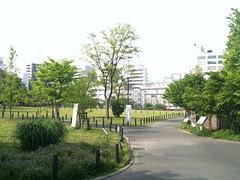 中目黒公園、5/5朝