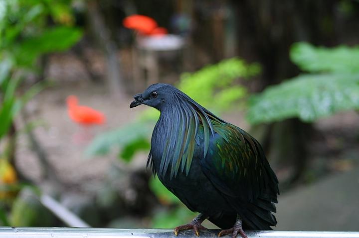 台北木柵動物園0026