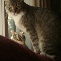 Buckley on the sofa, Mavis in the window