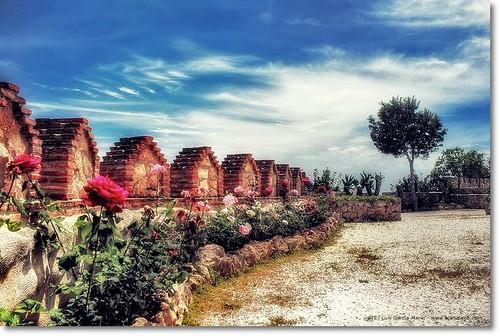 Camino de rosas - Primrose path