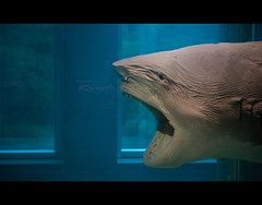 Shark (KeatsAndKeats) Tags: nyc newyork water shark tank preserved met metropolitanmuseumofart