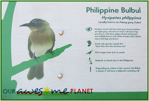 Bird Watching @ Nuvali-42