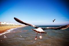 take off (MrLomo) Tags: blue sea summer england bird beach water fly seaside wings brighton waves seagull flight beak sunny bluesky flap brightonpier