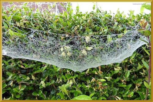 Sheet Web 1