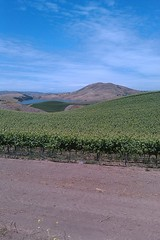 Scenic View in the Paicines Vineyard
