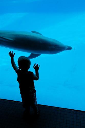 dolphin awe