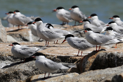 group terns rock