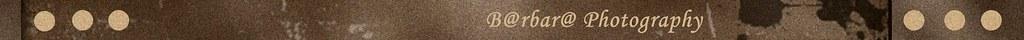 blogger barra