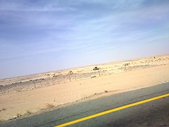 On The Road, ~ (aa) Tags: road travel desert camel riyadh ksa