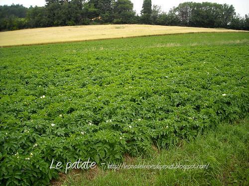 Verso Farneto le patate