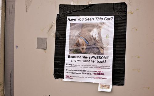 Missing: One AWESOME Cat