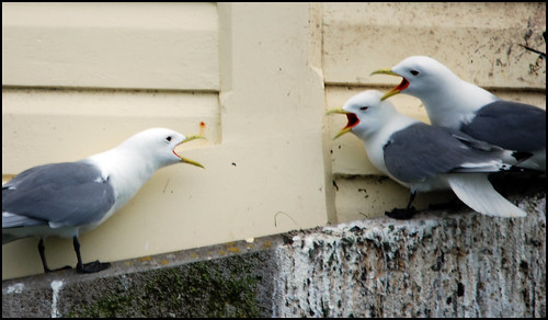 Argument by rikdom, on Flickr