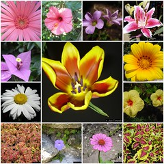 4683149661 6b8a833a7c m Festival de las Flores en Aibonito del 24 de Junio al 3 de Julio