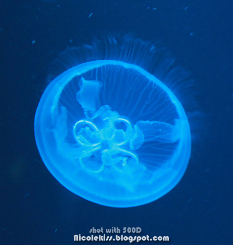 pretty luminous jellyfish
