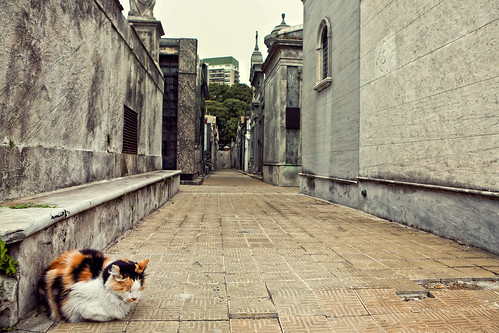 cemetery cats