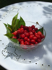 Life's a Bowl of Cherries in Videix, Limousin, France (LesTroisChenes) Tags: france cherries limousin bowlofcherries redcherries ripecherries