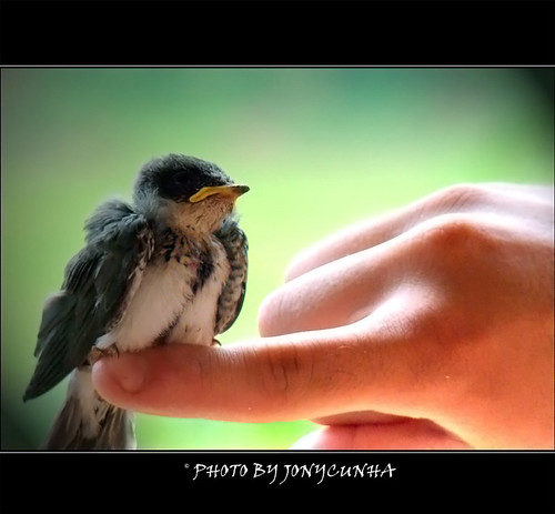 PÁSSARO FERIDO - Wounded Bird
