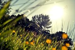 Sunny Days (paulmcginley.co.uk) Tags: grass nikon balloch lochlomond d5000