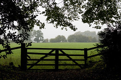 [follow your own path] (.cascata.) Tags: uk autumn trees mist green fog grey countryside gate walk cotswolds westonbirt british