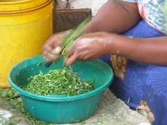 Shredding Spinach with just a knife (Unseen Horizons) Tags: lamu cereals townsquare lamumarket lamutownsquare