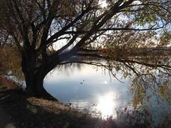 Crown Hill Park 3