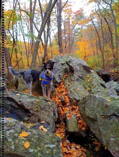 norwood on boulder