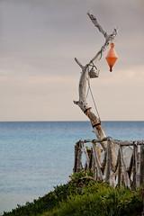 Beach Tree Tunisia (mark hunter images) Tags: sea seascape beach water canon outdoors coast northafrica tunisia 5d hammamet seashore 2010 mark2 markhunter 5dmark2 markhunterimages