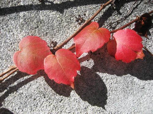 Outono em Miramar