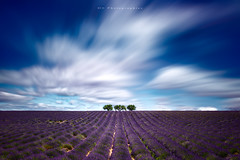 valensole (Objectif dizi (O.DPhotographies)) Tags: paysages photography megashot landscapes longexposure light nikon nisifilter nikonphotographer valensole fineartphotography france photomag