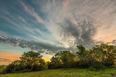 Green Pasture Sunrise (thefisch1) Tags: sunrise sunset intense cloud layers pasture grass tree horizon sky