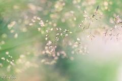 { S O F T E R } (koral.dawn) Tags: soft focus softfocus new edit lightroom light sun sunshine editing lightroomart lightroomedits lightroomlove canoon canonrebel canonphotography canonphoto canonrebelt5i t5i 50mm 50mmcompactmacro compactmacro macro flowers nature flower weeds pennsylvania pennsylvanialove pennsylvaniaisbeautiful hikepennsylvania scenicpennsylvania tunkhannock art digital lighting lights sunlight sunnyday sunny green naturelove natureaddicts ilovenature greenisbeautiful greennature different unique