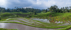 The terraced rice fields, Bali island, Jatiluwih, Indonesia (Eric Lafforgue) Tags: agricultural agriculture asia asian bali1483 balinese breathtaking countryside crops cultivated culture farming farmland fields green growing horizontal indonesia indonesian irrigation landscape lush nature nopeople outdoors paddies reflection ricefields ricepaddies riceterraces rural scenery scenic subak terracefarming terraced terraces terracing unescoworldheritagesite verdant village water jatiluwih baliisland