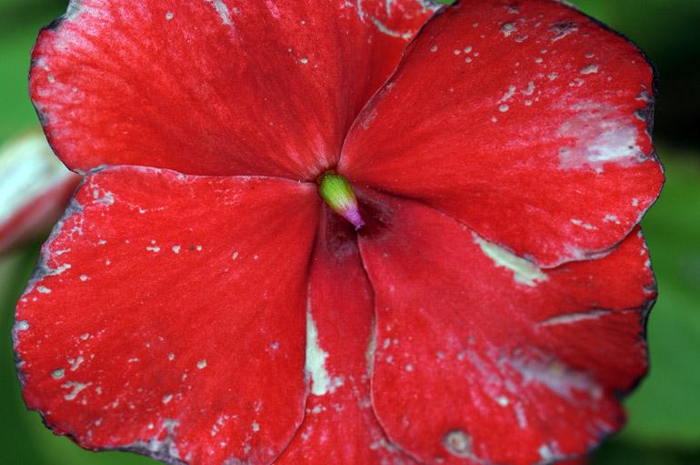 petals_0003