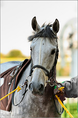 HorSe |  (Faisal AlKhudairy \   ) Tags: horse white black canon photography zoom l usm 700 70 f4  faisal 70200mm     400d     alkhudairy