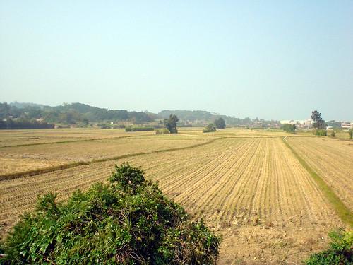 06.剛收割完的稻田
