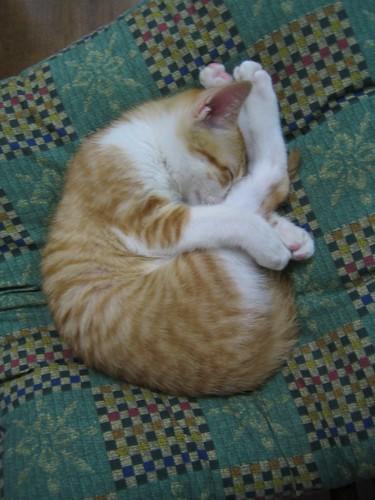 皮皮的瑜珈睡姿