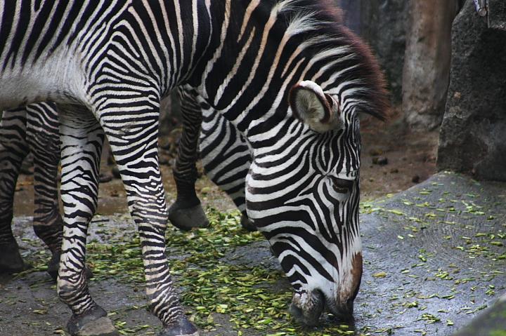 2009木柵動物園0021