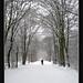 Mùa đông - Winter