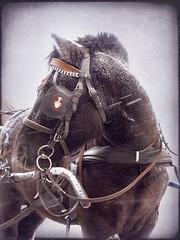 A winter horse:) (raphic :)) Tags: winter horse snow texture nature lumix poland polska panasonic cart harness zima nieg junks przyroda ko wz mieci topseven raphic tekstura impressedbeauty fz8 dmcfz8 uprz updatecollection redmatrix flickrvault flickrvaultexcellence newgoldenseal mygearandmepremium zaprzg