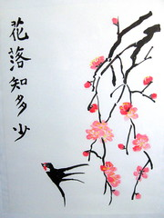 Backed Swallow and Cherry Blossoms