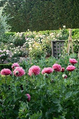 Kitchen Garden 10