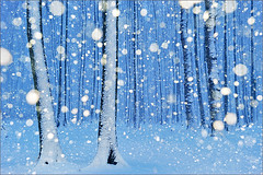 magical forest I (Sandra Bartocha) Tags: blue schnee trees winter snow cold forest germany deutschland snowflakes flash blau snowfall kalt wald bume enchanted winterwonderland schneefall schneeflocken hauntedforest spookyforest csandrabartocha wwwbartochaphotographycom gespensterwaldnienhagen