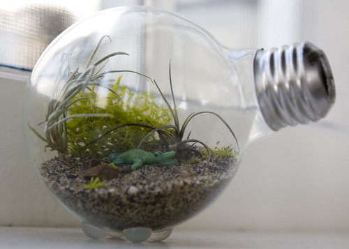 Light bulb terrarium from Hipster Home