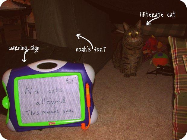 noahvscat