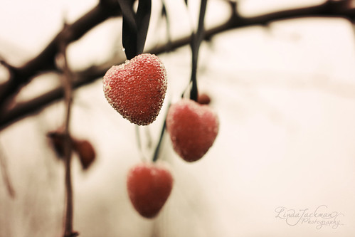 Go out on a limb, thats where the fruit is (by Linda Jackman Photo)