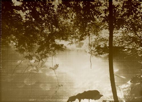 The Mist3