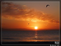 un matin ... One morning ... Einen Morgen ... una mattina ... una maana ...   ...  (Rached MILADI - ) Tags: sunset sky cloud mer beach nature beautiful rouge lumix soleil good seagull bonito sable super panasonic reflet shore cielo puestadesol  nuage paysage animaux reflexions plage better gaviota oiseau fz nube tunisie rochers 38  rivage aube  mouettes            salammbo  rached salammb  salambo  miladi  salamb rachedmiladi  fz38 fz35 dmcfz38 lumixfz38