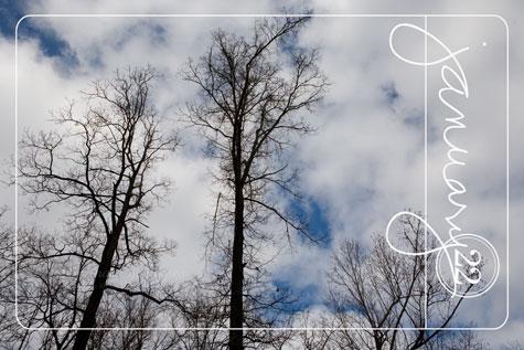 Winter-Sky_Jan222010_0002Aweb
